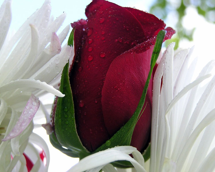 Отдамся мужчине за цветы